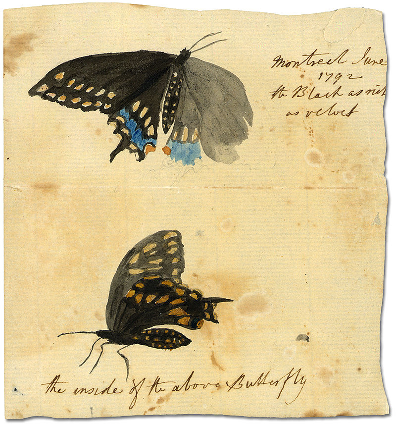 Black_butterfly_in_Montreal,_1792